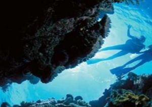 Deep Sea Divers Den - Tourism Brisbane